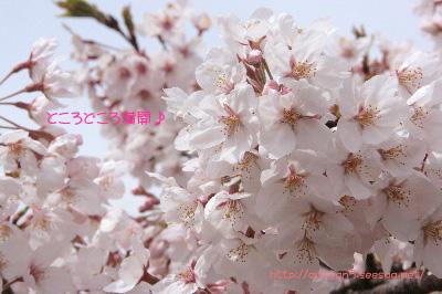 2009.04.05-115.jpg