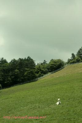 2010.08.03-Yatsugatake-005.jpg