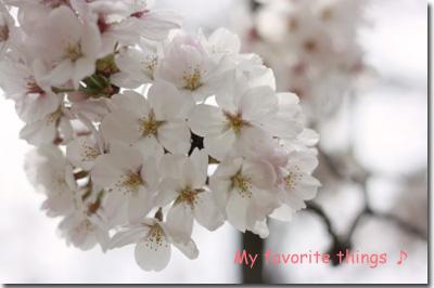 2011.04.10-020.jpg